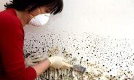 Плесень на обоях: эффективные методы устранения грибка