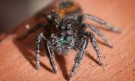 Как избавиться от пауков – выбираем подходящий способ