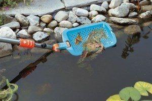 Как очистить пруд от водорослей, ила и биологического мусора?