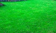 Преимущества покупки газонной травосмеси у надежного поставщика