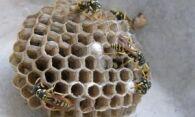 Как избавиться от осиных гнезд: полезные советы по борьбе с осами