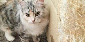 Как отучить кошку точить когти о мебель, диван и стены