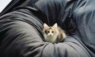 Как избавиться от запаха мочи на диване – изучаем эффективные способы