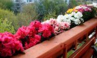Цветы на балконе – мини-сад своими руками
