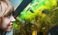 Как правильно чистить аквариум, мыть его стенки и дно