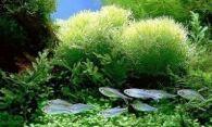 Как правильно чистить грунт, воду и водоросли в аквариуме
