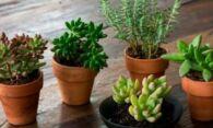 Суккуленты и кактусы – просто приобрести у надежного поставщика