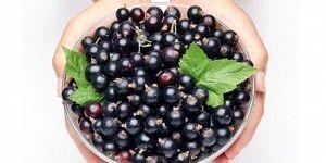 Пятна от черной смородины: чем вывести ягодный сок с одежды