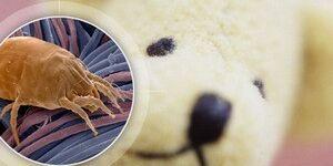 Пылевые клещи – как избавиться максимально быстро?