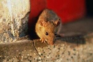 Как избавиться от мышей в частном доме – механические, химические, народные и инновационные способы