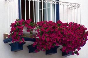 Оформлення балкона квітами