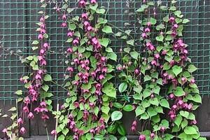 Дизайн балкона квітами