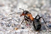 мурахи в квартирі