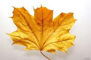 як погладити листя з дерев