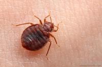 Чем травить тараканов в квартире – рекомендации специалистов