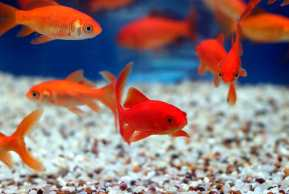 чистка нового акваріума
