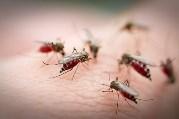 з комарами в квартирі