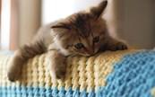 від запаху котячої сечі на м'яких меблів