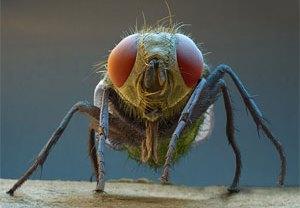 народні засоби від мух