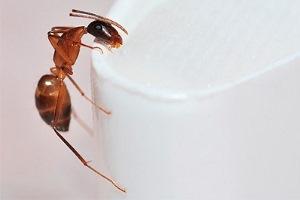 шкода від мурах