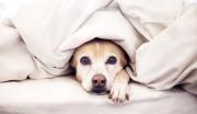 як позбутися від запаху собаки