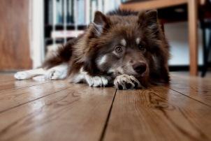 як прибрати запах від собаки