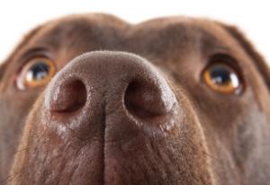 причини запаху собаки