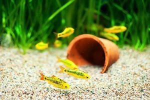 чому вода в акваріумі погано пахне
