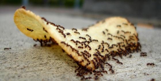 мурахи в будинку