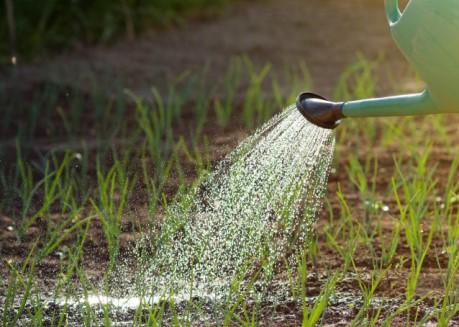 Как избавиться от луковой мухи и ее личинок в огороде?